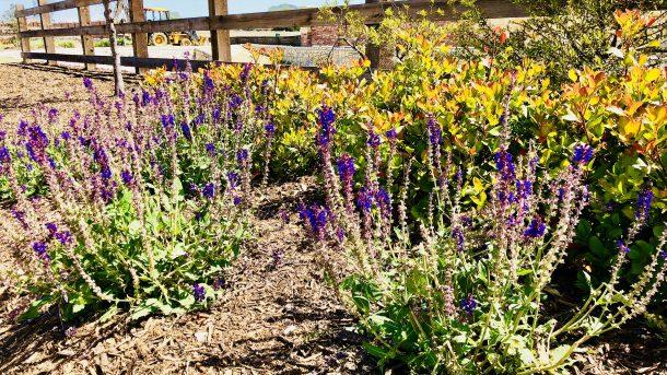 Erwin_Farms_McKinney_wood_fence_flowers