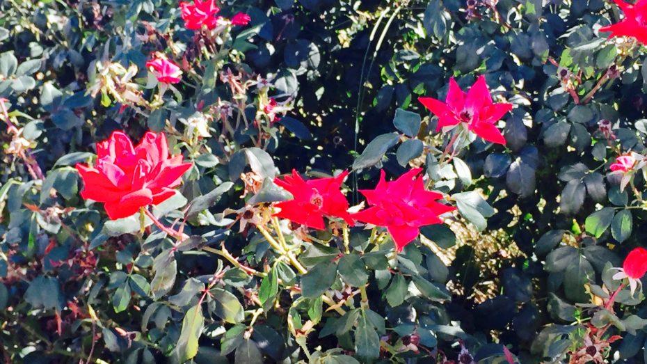 Frontier_Estates_flowers