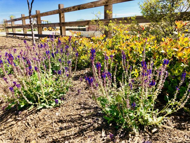 Erwin_Farms_McKinney_wood_fence_flowers